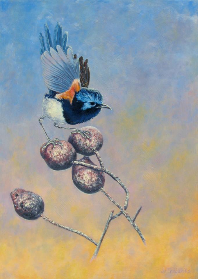Jo Frederiks - Red Winged Fairy Wren